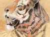 tiger in pastels