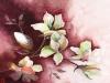 Magnolia\'s